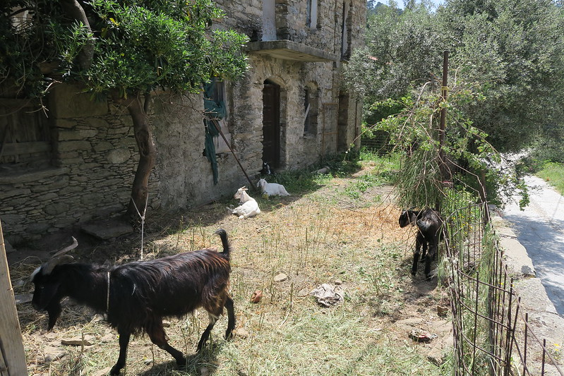 Greek Cypriot farm